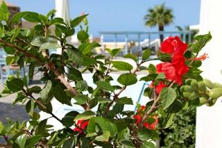 facilities aethrio hotel garden